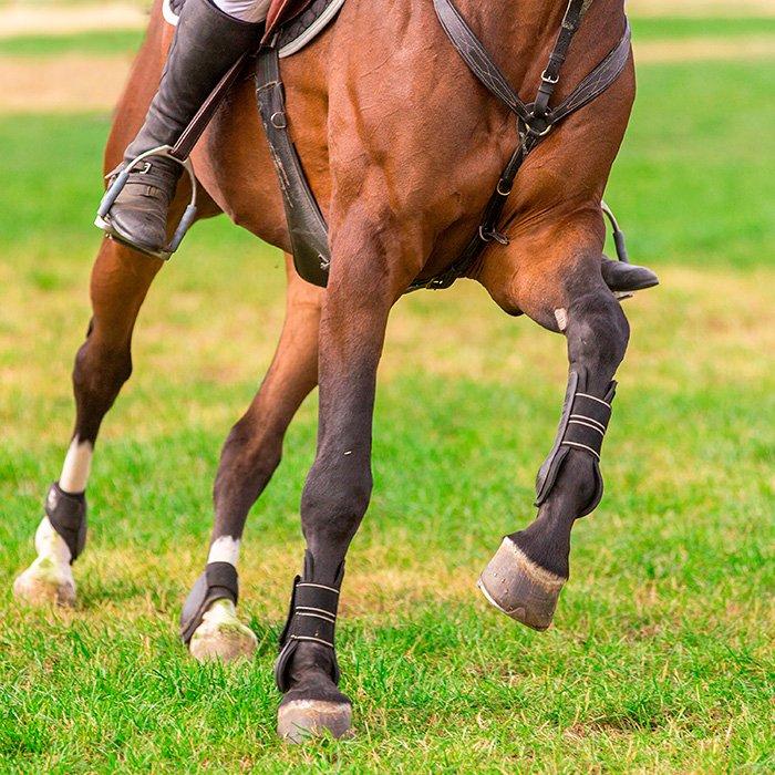 Starka ben och ligament